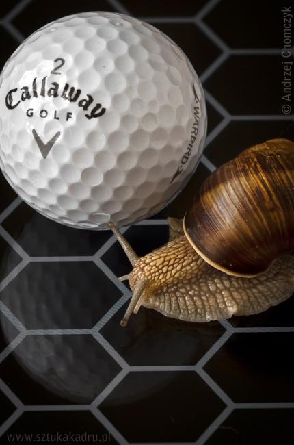 Ślimak i piłka golfowa