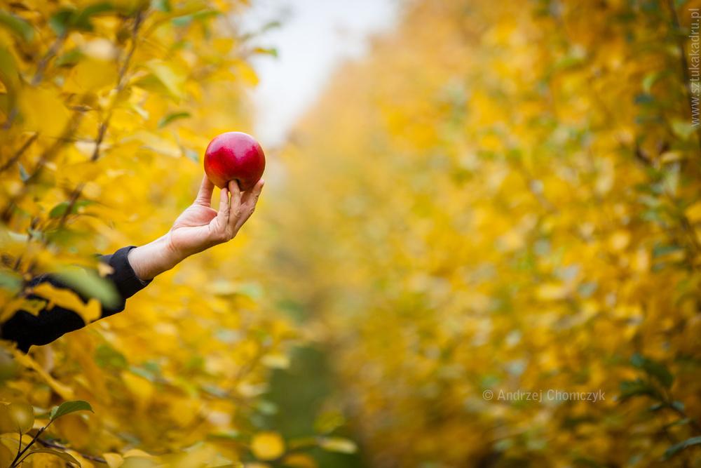 jablka-350